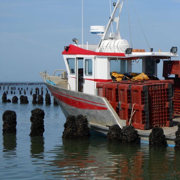 Baudet_navire